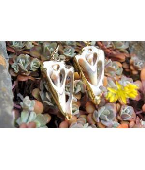 Ohrringe, aufgeschnittene Muscheln